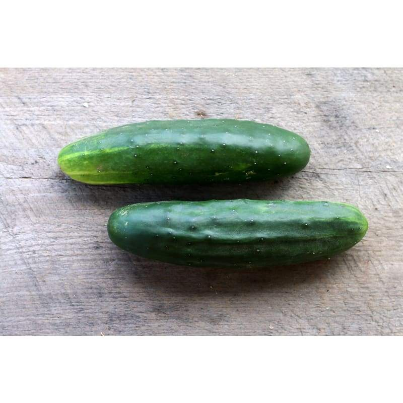 Marketmore Cucumber ( 60 Days) - Vegetables
