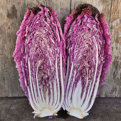Merlot Chinese Cabbage (F1 Hybrid 60 Days) - Vegetables