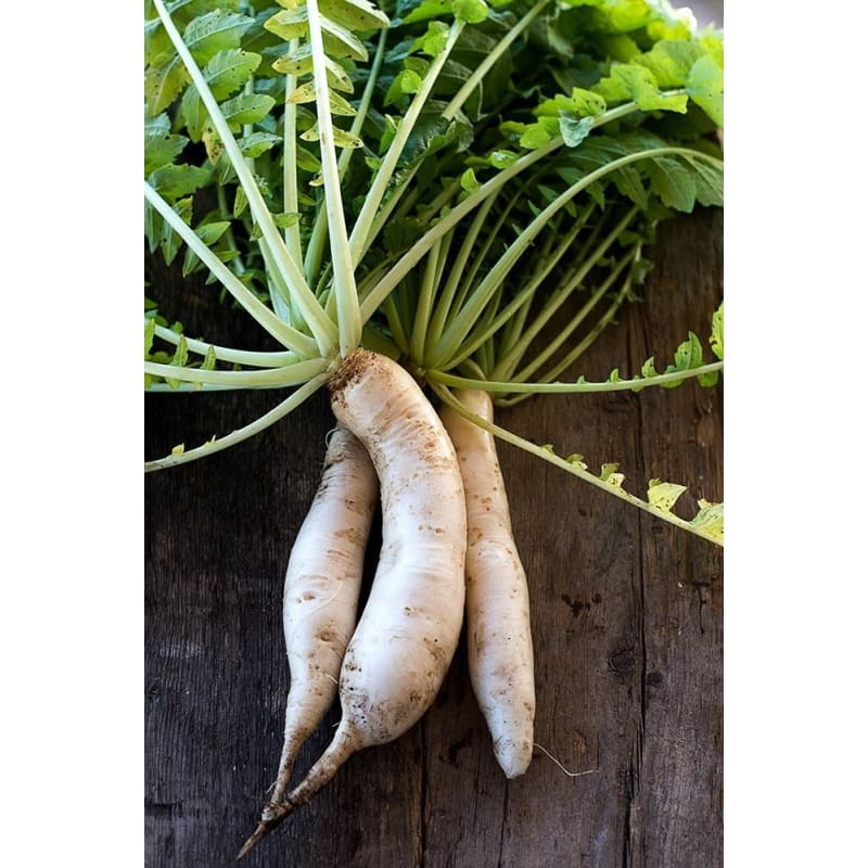 Minowase Daikon Radish (Heirloom, 55 Days)