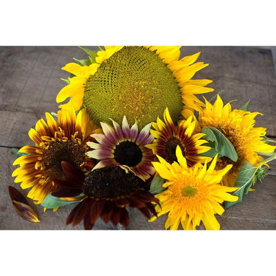 Sunflower - Monets Palet Mixture - Flowers