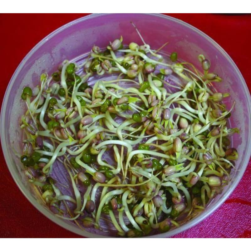 MUNG BEAN SPROUTING SEED  (Organic)