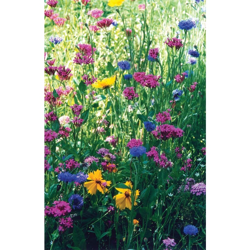 North American Wildflower Mix - Flowers