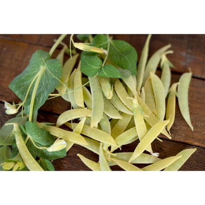 Opal Creek Snap Pea ( 70 Days ) - Vegetables