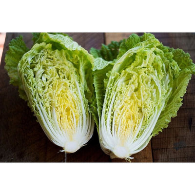 Optiko Chinese Cabbage (F1 Hybrid 75 Days) - Vegetables