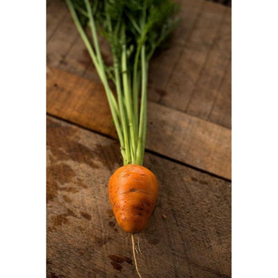 Oxheart Carrot (90 Days) - Vegetables