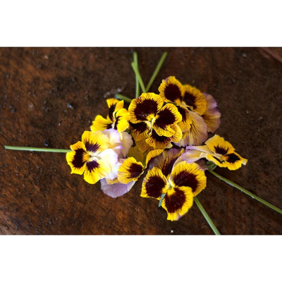 Pansy - Rococo Mix- Discontinued - Flowers