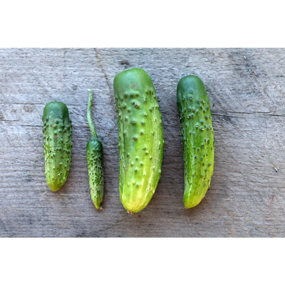 Parisian Pickle Cucumber (Heirloom 50 Days) - Vegetables