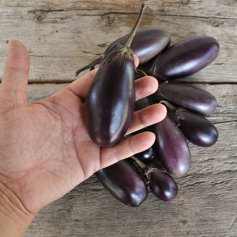 Patio Baby Eggplant (F1 Hybrid 45 Days)