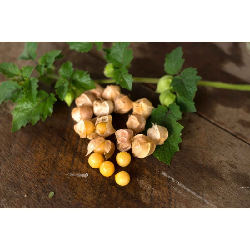 Pineapple Ground Cherry (Heirloom 75 Days) - Vegetables