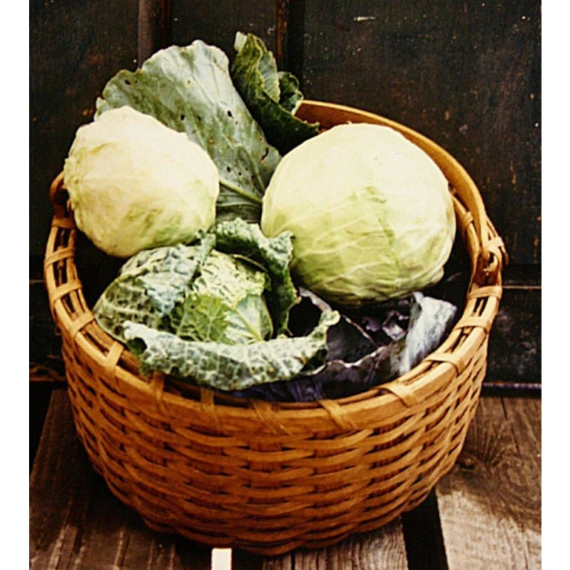 Pinetree Cabbage Mix - Vegetables