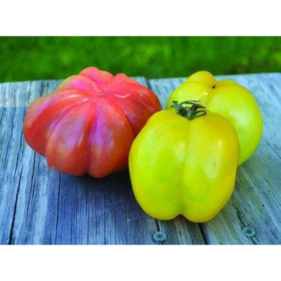 Pink Stuffer Tomato (80 Days) - Vegetables