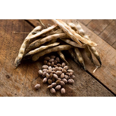 Pinto Bush Dried Bean (100 Days) - Vegetables