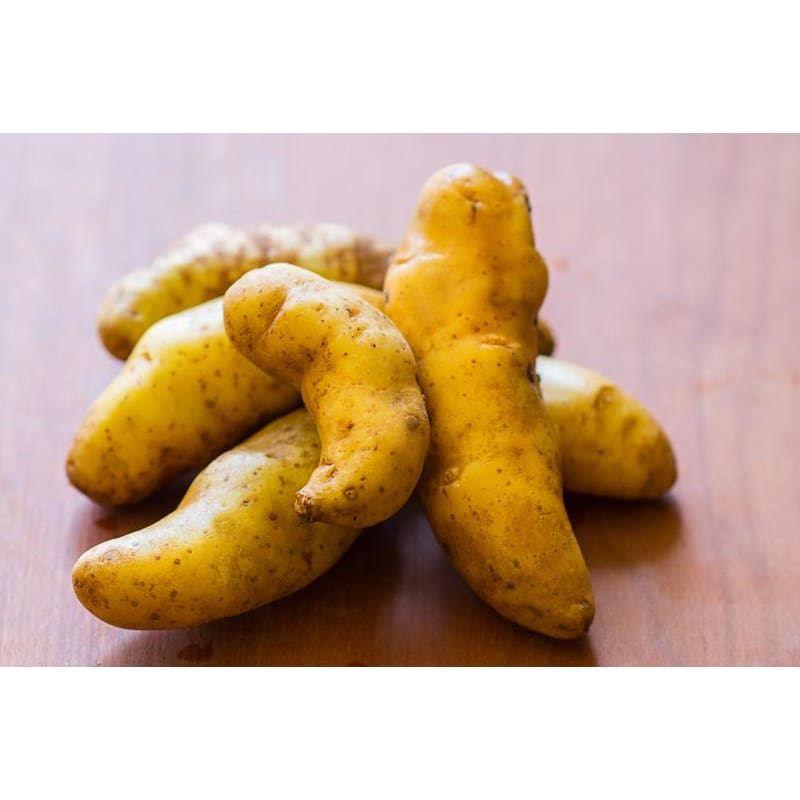 Potato 'Fingerling Collection'