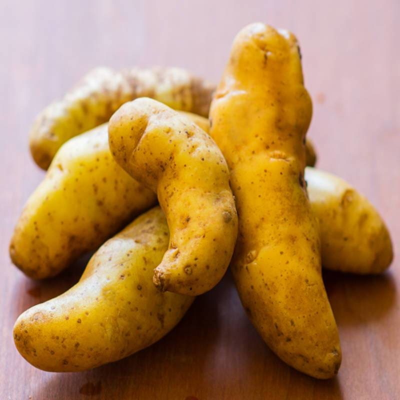 Potato Fingerling 'Russian Banana'