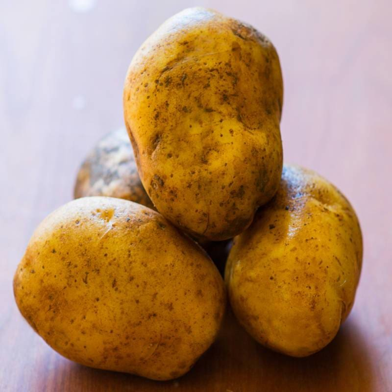 Potato 'Kennebec'