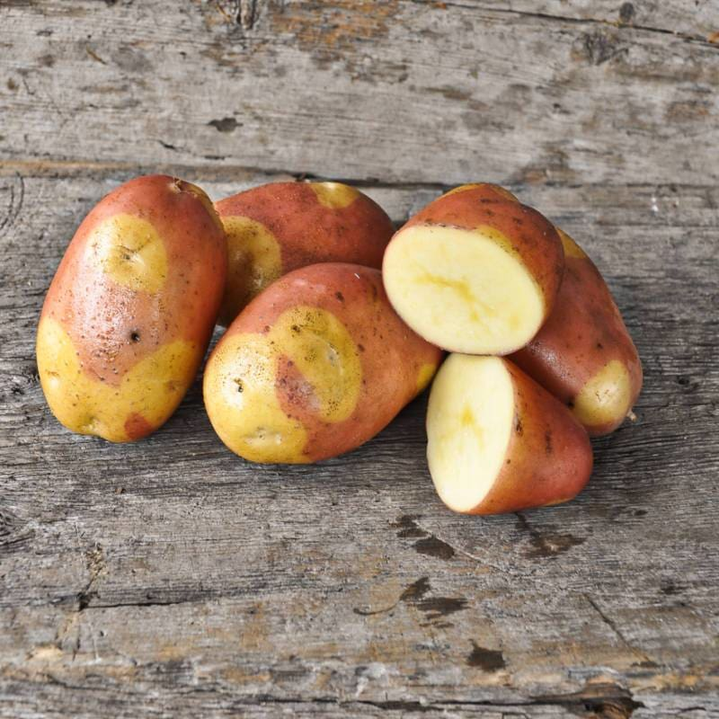 Potato 'Pinto Gold'