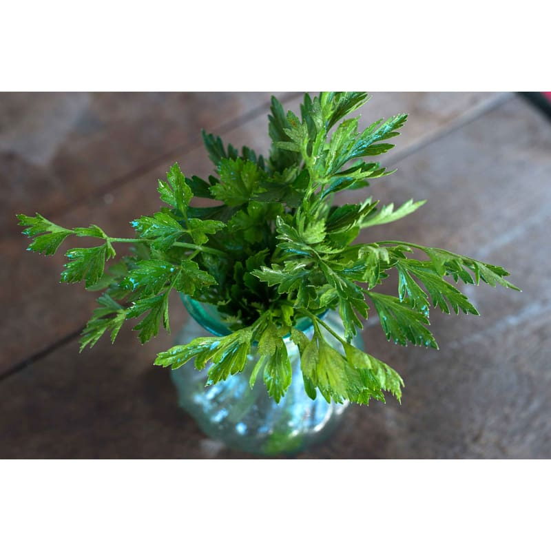 Prezzemolo Gigante D Italia Parsley - Herbs