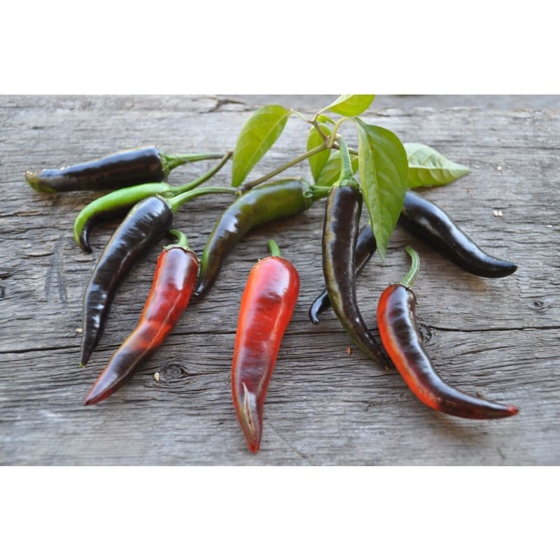 Purple Cayenne Pepper (70 Days) - Vegetables