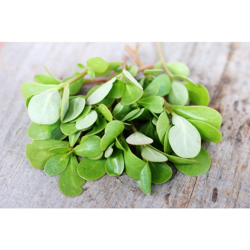 Red Gruner Purslane (50 Days) - Vegetables