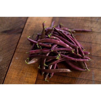 Red Swan Bush Bean (55 days) - Vegetables