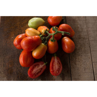 Roma Tomato (78 Days) - Vegetables