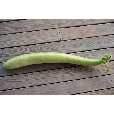Snake Gourd (100 Days) - Vegetables