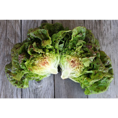 Speckled Butterhead Lettuce (Heirloom 55 days) - Vegetables