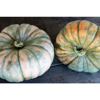 Speckled Hound Squash (F1 Hybrid 100 Days) - Vegetables