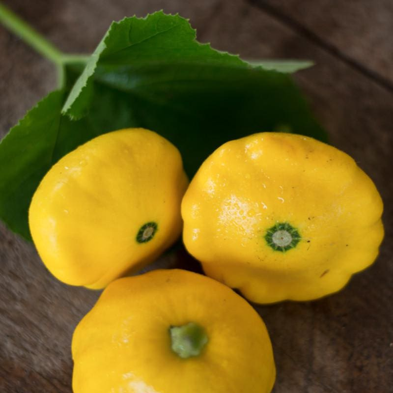 Sunburst Scallop Summer Squash (F1 Hybrid 50 Days) - Vegetables
