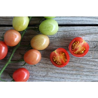 Sunpeach Tomato (F1 Hybrid 60 Days) - Vegetables