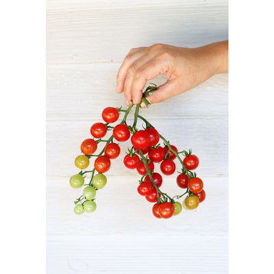 Sweet Aperitif Tomato (80 Days) - Vegetables