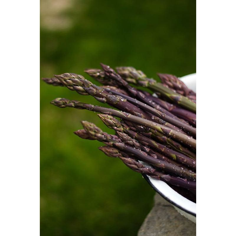 Sweet Purple Asparagus - Vegetables