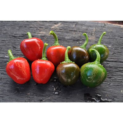 Sweet Red Cherry Pepper (75 Days) - Vegetables