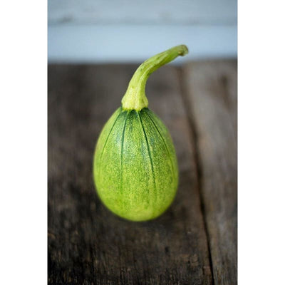 Tatume Summer Squash (Heirloom 50 Days) - Vegetables