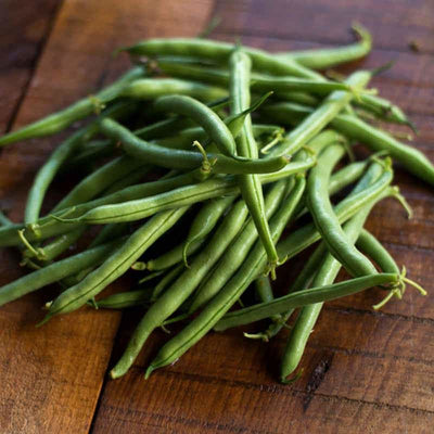 Tendergreen Improved Bush Bean (Heirloom 53 Days) - Vegetables