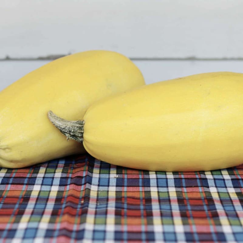Tivoli Spaghetti Squash (F1 Hybrid 98 days) - Vegetables
