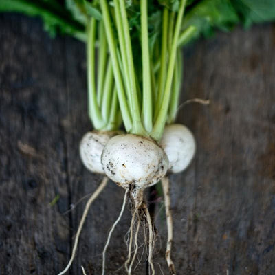 Tokyo Cross Turnip (F1 Hybrid 30 Days) - Vegetables