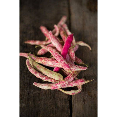Tongue of Fire Bush Bean (Heirloom 60 Days) - Vegetables