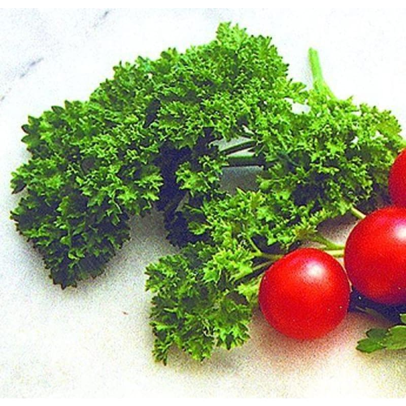 Triple Curled Parsley - Herbs