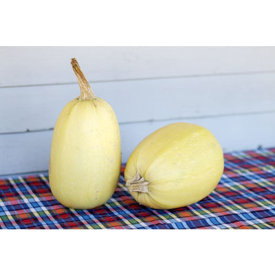 Vegetable Spaghetti Winter Squash (Heirloom 100 Days) - Vegetables