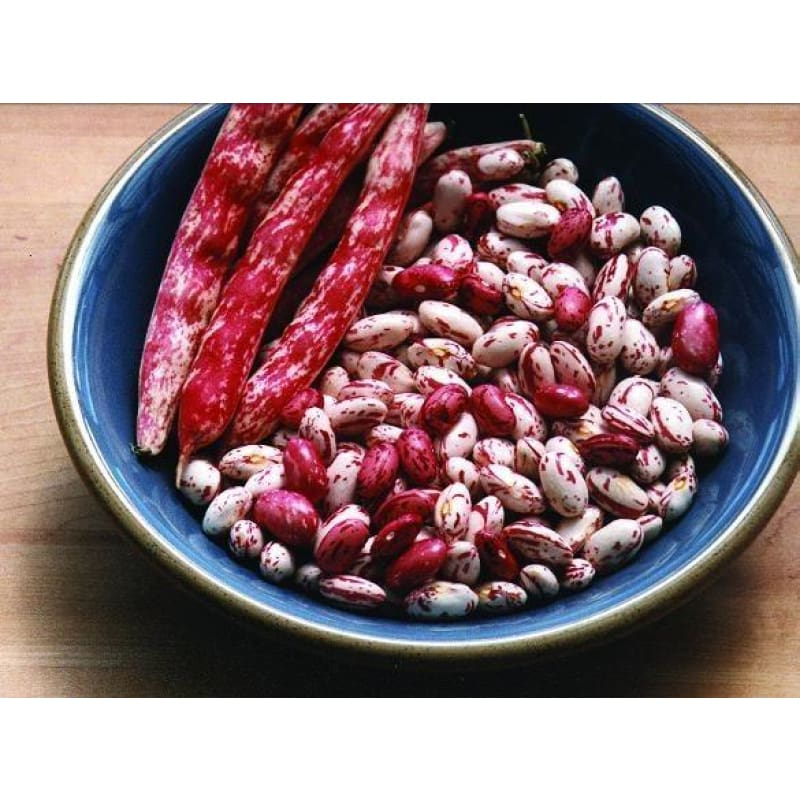 Vermont Cranberry Bush Dried Bean (Heirloom, 85 days)