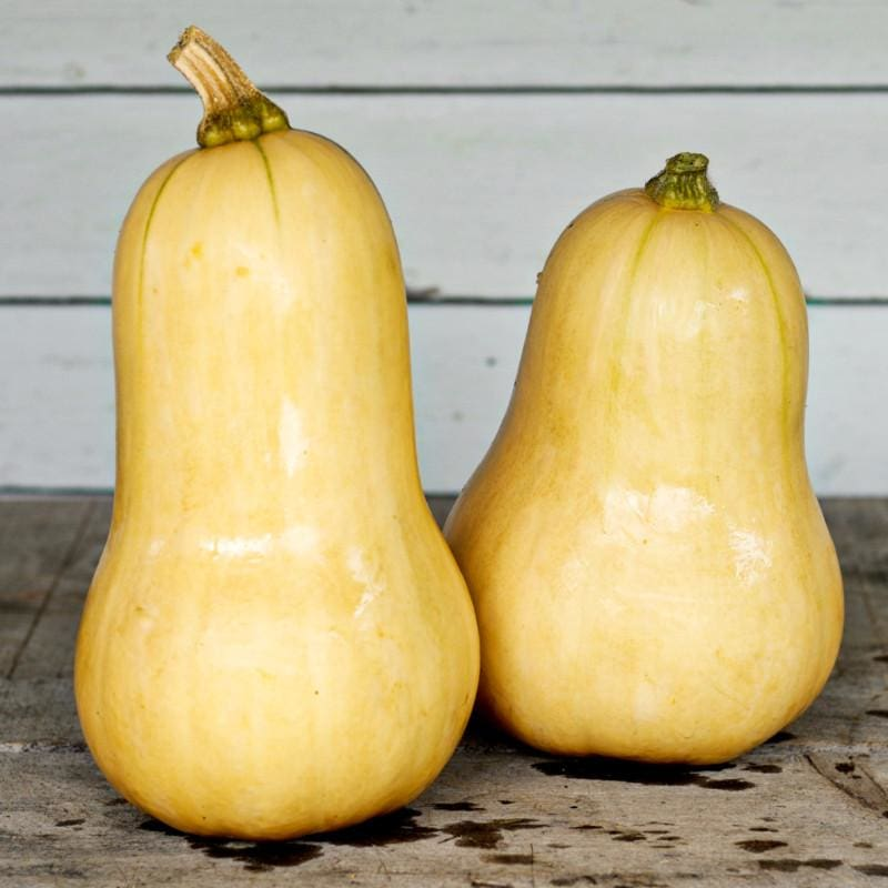 Waltham Butternut Squash (90 Days) - Vegetables