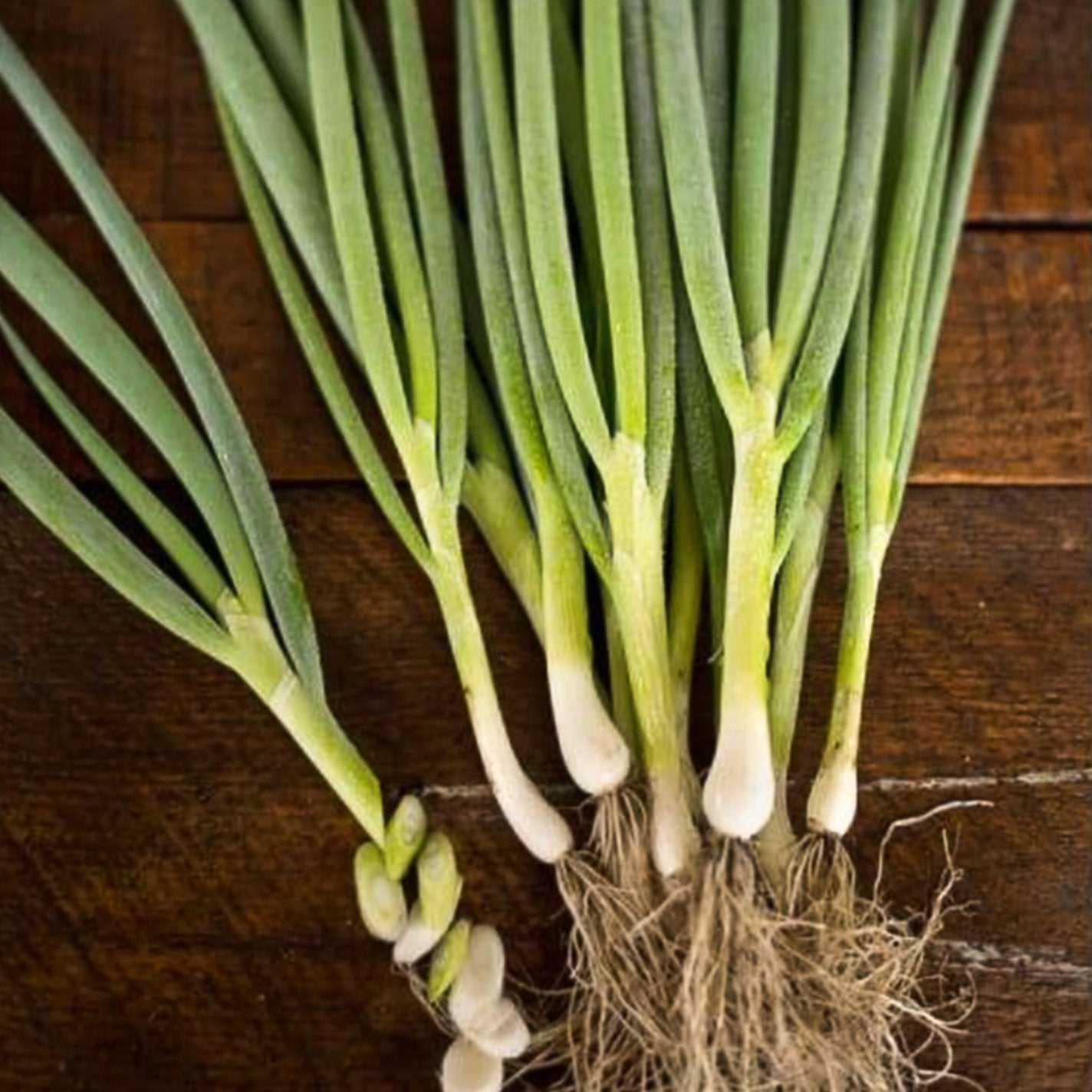 Warrior Bunching Onion (60 days) - Vegetables