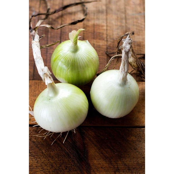 ONION HEIRLOOM ORGANIC 25+ SEEDS GREAT FOR COOKING SWEET SPANISH WHITE