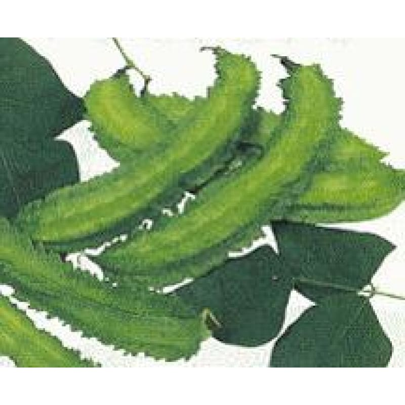 Winged Bean (75 Days) - Vegetables