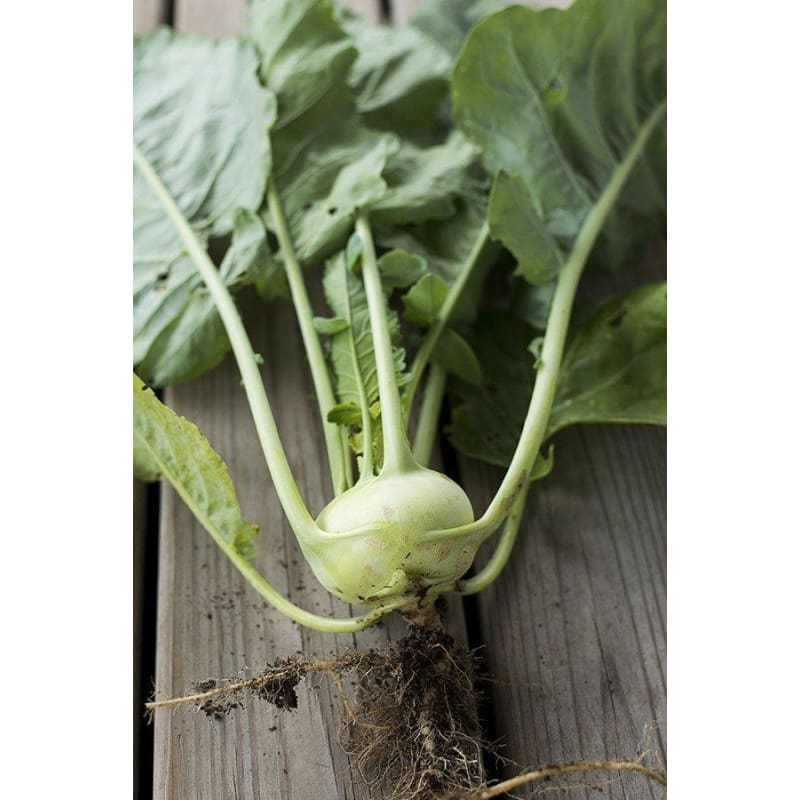Winner Kohlrabi F1 Hybrid 50 Days