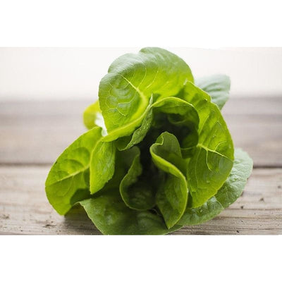 Winter Density Lettuce (28-54 Days) - Vegetables