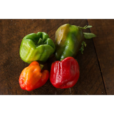 Wisconsin Lakes Pepper (75 Days) - Vegetables
