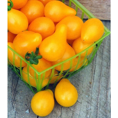 Yellow Pear Tomato (Heirloom 80 Days) - Vegetables