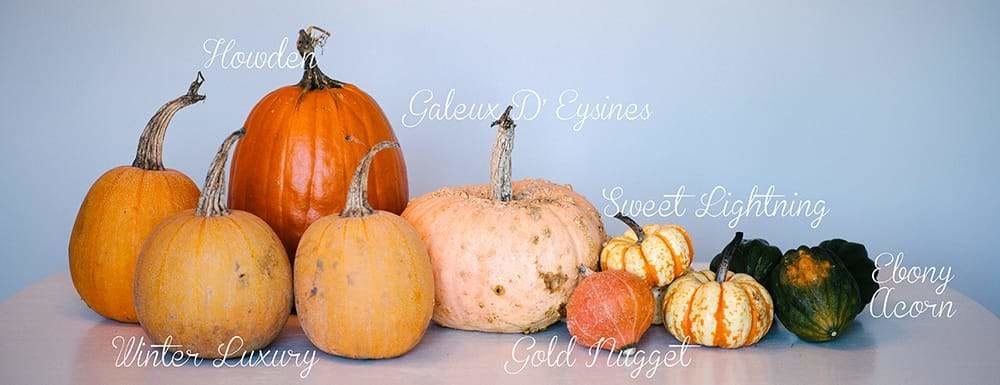 Pumpkins and squash with text